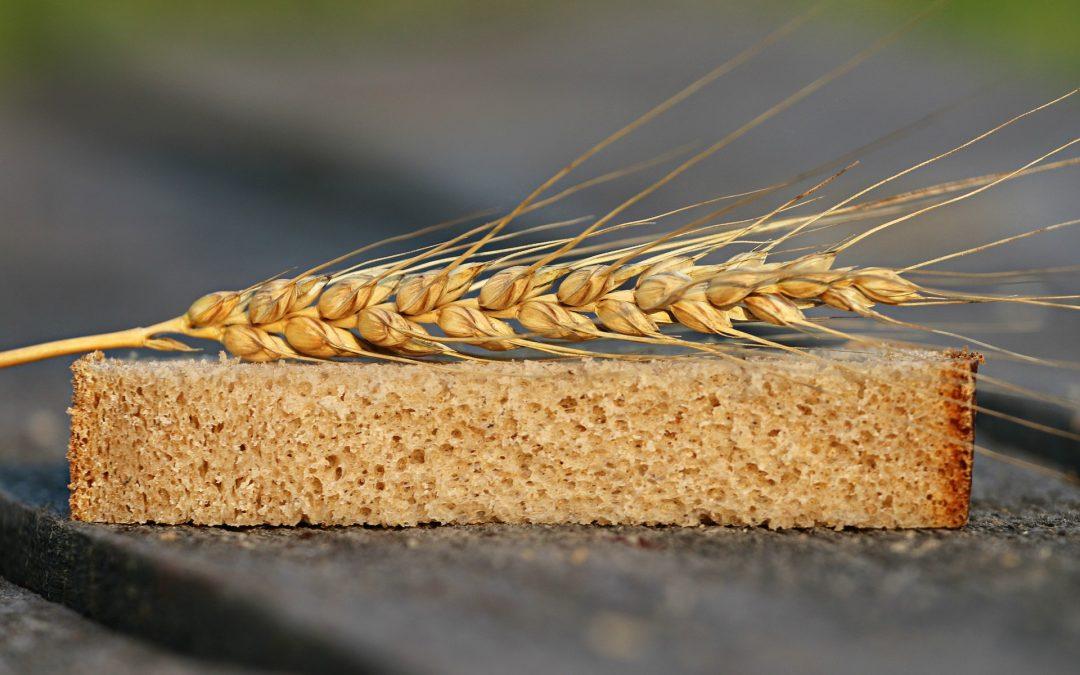 Salvado de trigo, fuente de altas cantidades de fibra
